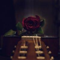 Flower :: Роман SadDieL