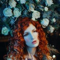 Снежная роза :: Katerina Klio