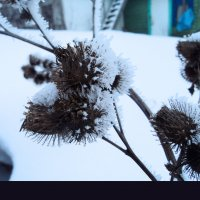 зимний сон :: Maryana Petrova