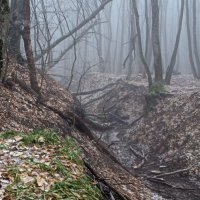 Зимний лес. :: Vladimir Lisunov
