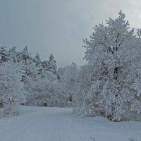 С последним днем зимы :: Наталья (D.Nat@lia)