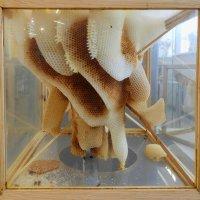 Пчелиная скульптура :: Андрей + Ирина Степановы