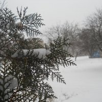 Узоры в снежную метель :: Галина