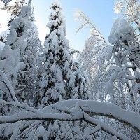 Уходит зимушка-зима..... :: Валентина Жукова
