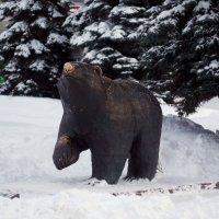 Пермский медведь :: Виктор Печищев