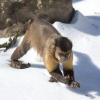 из жизни обезьян :: piter rub