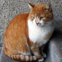 С праздником, рыжий кот! Пусть тебе повезёт! :: Тамара Бедай