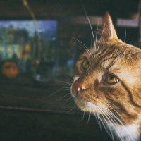 Первый день весны и День кошек в России :: Ольга Мальцева