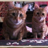 Мои любимые рыжики! :: ТАТЬЯНА (tatik)