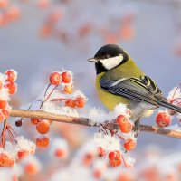В зимнем саду :: Влад