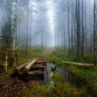 Утро в лесу :: Андрей Финогенов