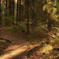 тропинка в лесу :: Лариса Крышталь