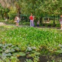 Сухумский ботанический сад :: Светлана Винокурова