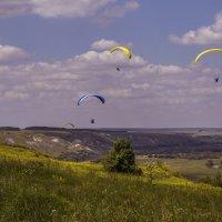 Летний день на меловых холмах 2016 :: Юрий Клишин