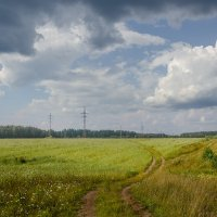 Через поле. :: Сергей l