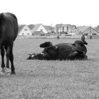 Хорошие лошадки :: Marina Pelymskaya