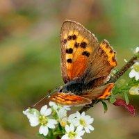 цветы-бабочки...3 :: Александр Прокудин