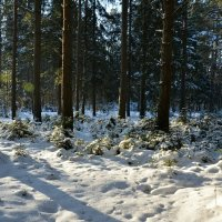 В зимнем лесу под Смоленском :: Милешкин Владимир Алексеевич