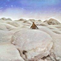 Снега, снега  начала марта... :: Андрей Заломленков
