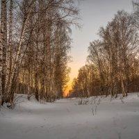 Зимняя роща :: Александр Попович