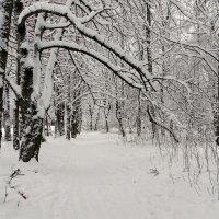 Зимний городской парк :: Милешкин Владимир Алексеевич