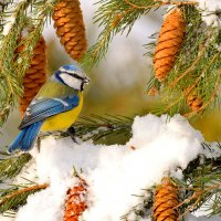 Зарисовка из зимнего леса :: Влад