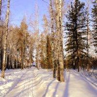 Солнечный февраль . :: Мила Бовкун