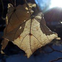 Солнечные листики-3 :: Асылбек Айманов
