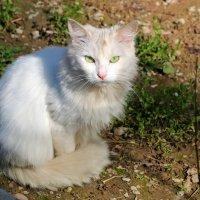 Пристальный взгляд зеленых глаз... :: Светлана
