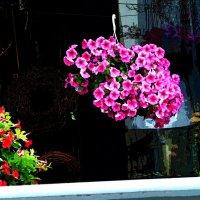 Цветы вокруг нас 4 :: Елена Куприянова