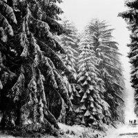 Зима в горах Арденах :: Борис Соловьев