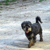 Любопытный собак :: Борис Соловьев