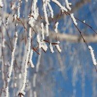 В зимнем серебре... :: Нэля Лысенко