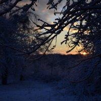 раннее зимнее утро :: Геннадий Титов