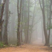 Туман в лесу :: vasja2k
