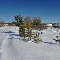 Стоит средь лесов деревенька... :: Светлана