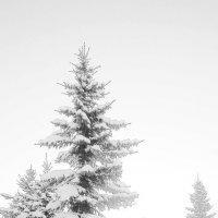 зимняя сказка :: Александр ***