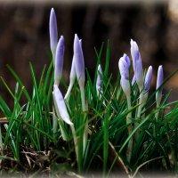 C Весной всех! :: Виктор