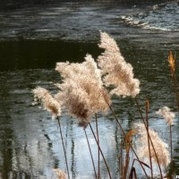 На берегу реки :: Нина Бутко