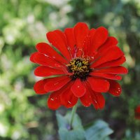 Цветок (перезалив) :: Лилия Кондратьева