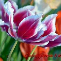 Поздравляю с чудесным праздником весеннего вдохновения и светлой радости - 8 марта! :: Ольга Русанова (olg-rusanowa2010)