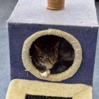 Кошкин дом :: dindin