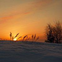 Зимний закат. :: Сергей l