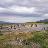 На острове пингвинов :: Владимир Жданов