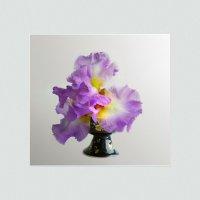 Цветок-букет :: Olenka