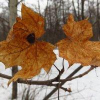 Золотая осень задержавшаяся до марта :: Андрей Лукьянов