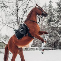 Лошадь :: Макс Беккер