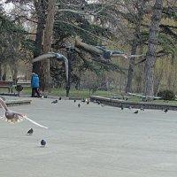 Парк Гагарина,Симферополь :: Валентин Семчишин