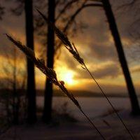 На закате... :: Анна Суханова
