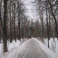 В парке в декабре :: Дмитрий Никитин